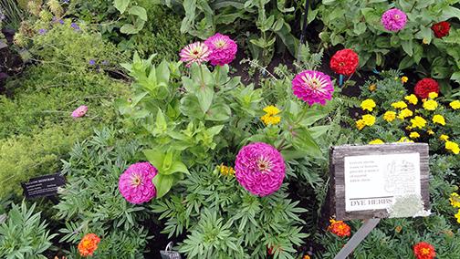 Cornell Botanic Gardens: a hidden gem | Cornell Chronicle