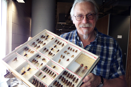 Cole Gilbert displays a tray of collected cicadas
