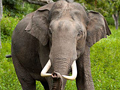 Better elephant stimulation needed to get good sperm