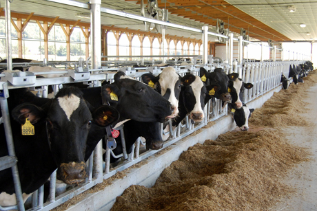 New Barn Makes Cows And Researchers Happier