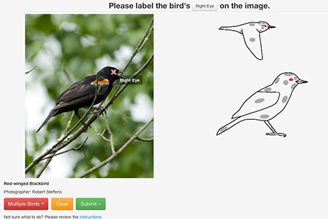 In the HotSpot activity, users are shown an image of a bird and asked to click on a specific body part to teach Merlin's computer vision system how to map out bird anatomy in a photo.