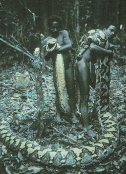Study of man-eating snakes: Snakes are predators on, prey of, and