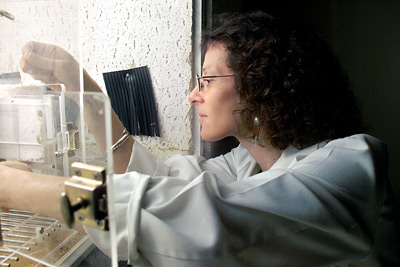 Barbara Strupp at work in the lab