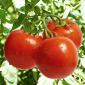 $4.7M grant to study fruit genetics, development