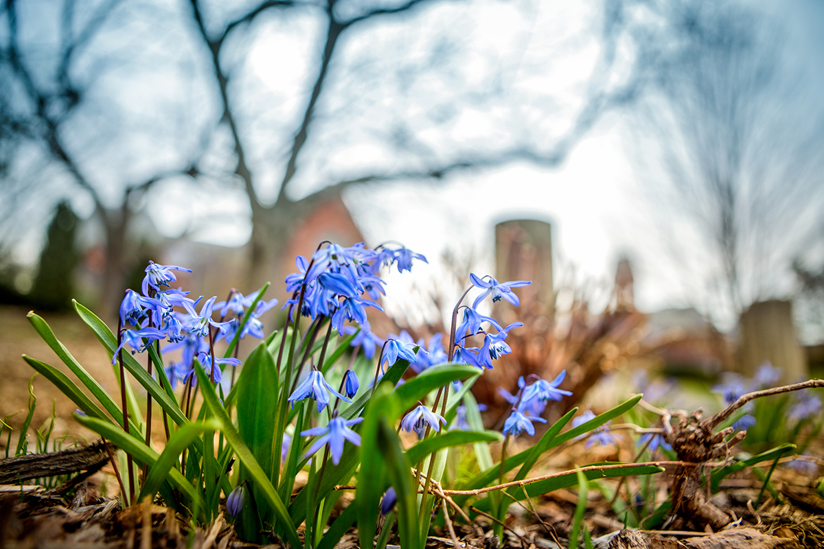 Spring begins to show its colors on campus.