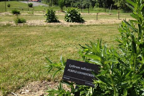 Tour allure Enjoy Cornells garden of weedin Cornell Chronicle