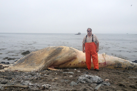 Willy Bemis stands near beached Minke whale