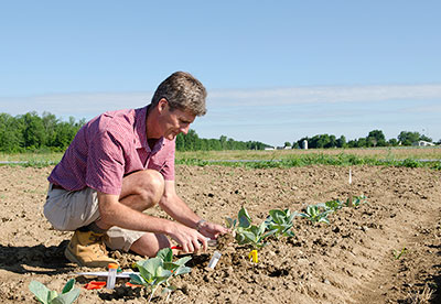 Thomas Bjorkman working with broccoli varieties