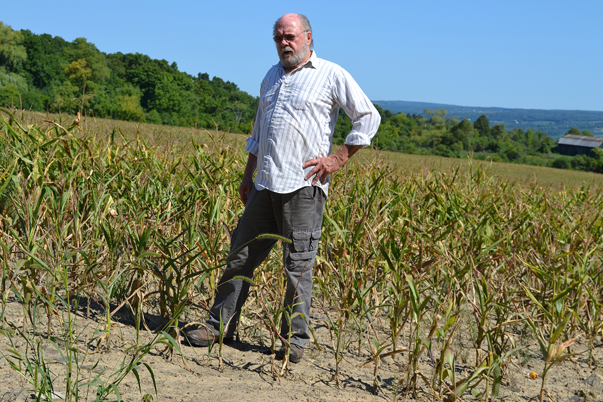 Marvin Rood, a farmer in Yates County, stands in corn and soybean fields impacted by drought in September 2016.