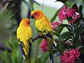 Tropical birds in rainforest