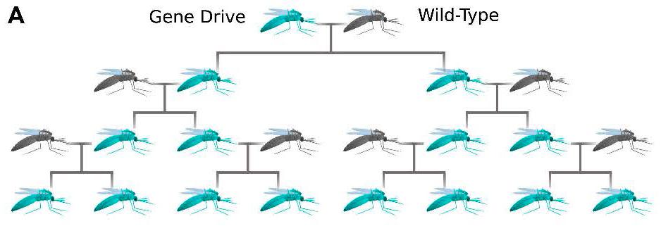 Image result for gene drive