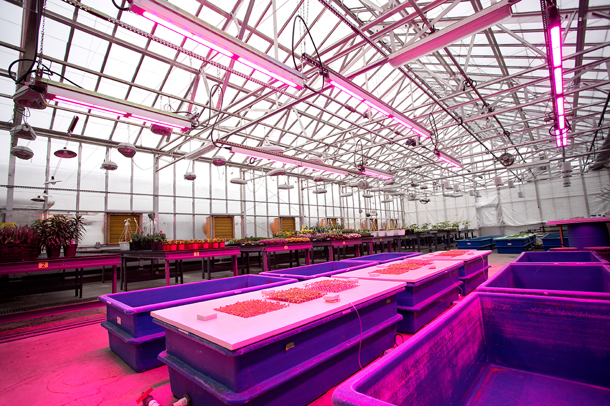 Kenneth Post Laboratory greenhouses. u2039u203a & New consortium aims to reduce greenhouse energy use | Cornell ... azcodes.com