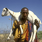 Kenya's drought insurance helps Islamic herders