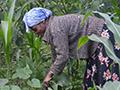 Tanzania farmer