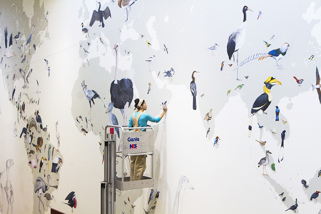 Mural Spans Wall And 375 Million Year Avian History Cornell Chronicle