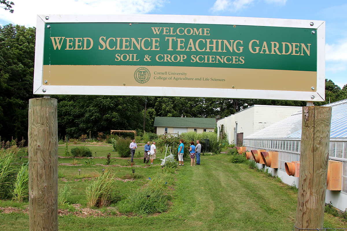 garden offers living library of weeds poisonous plants cornell