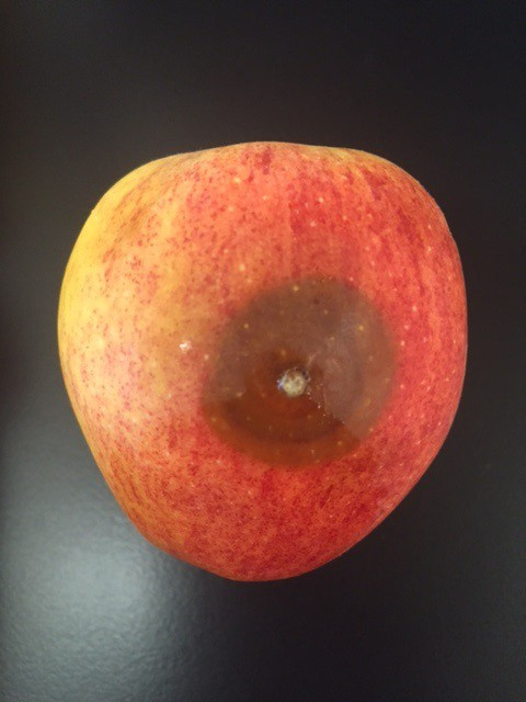 infected apple