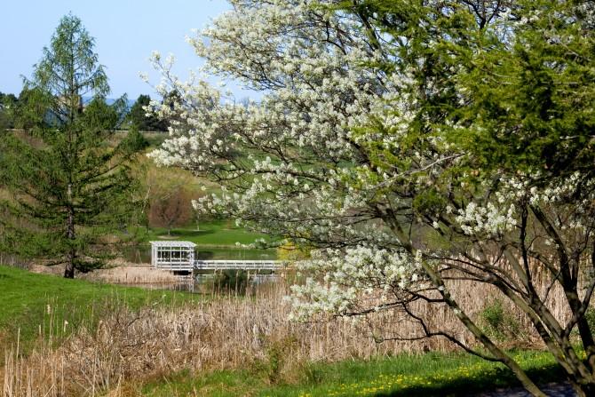 Cornell Botanic Gardens heralds spring | Cornell Chronicle