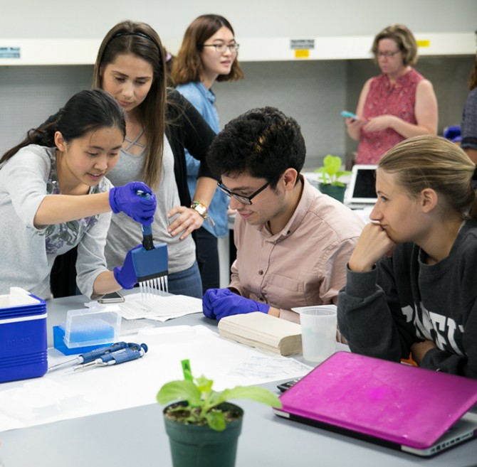 undergraduate students diagnosing wine grape diseases