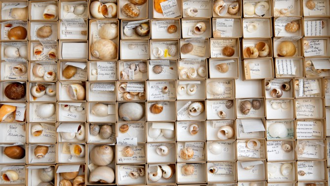 mollusk collection