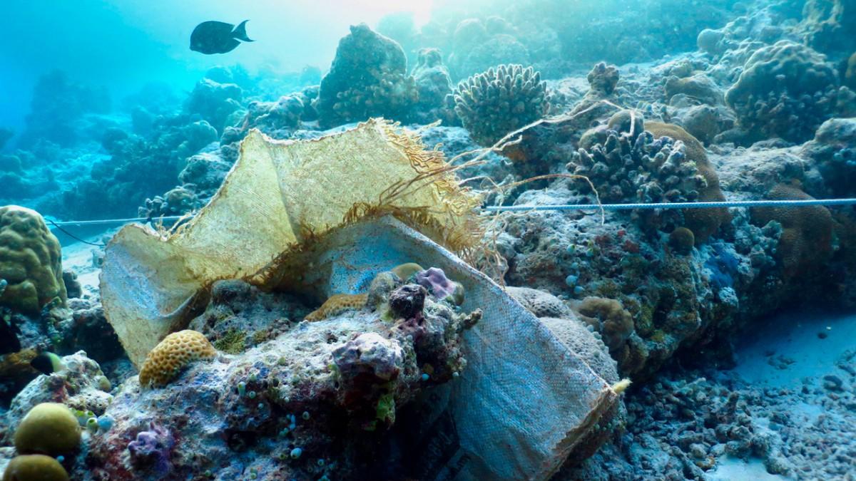 Ocean plastics raise risk of coral reef disease