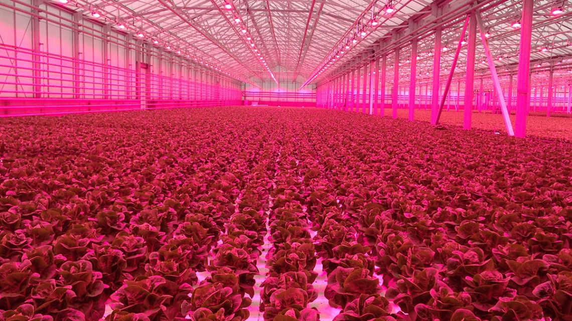 commercial controlled-environment agriculture greenhouse operation producing leafy greens in eastern NY