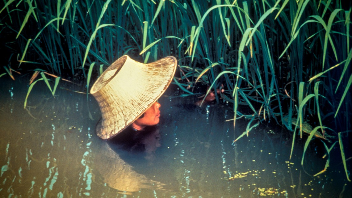 rice in deep water