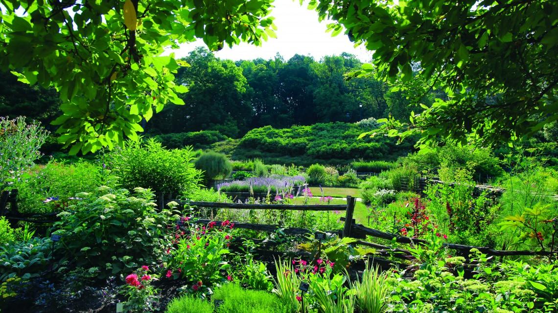 Cornell Botanic Gardens\' plants available online | Cornell Chronicle