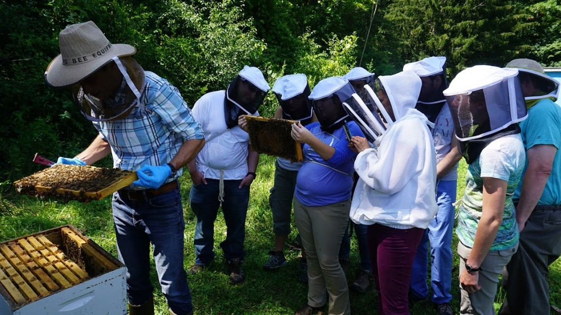 Vet students with bees