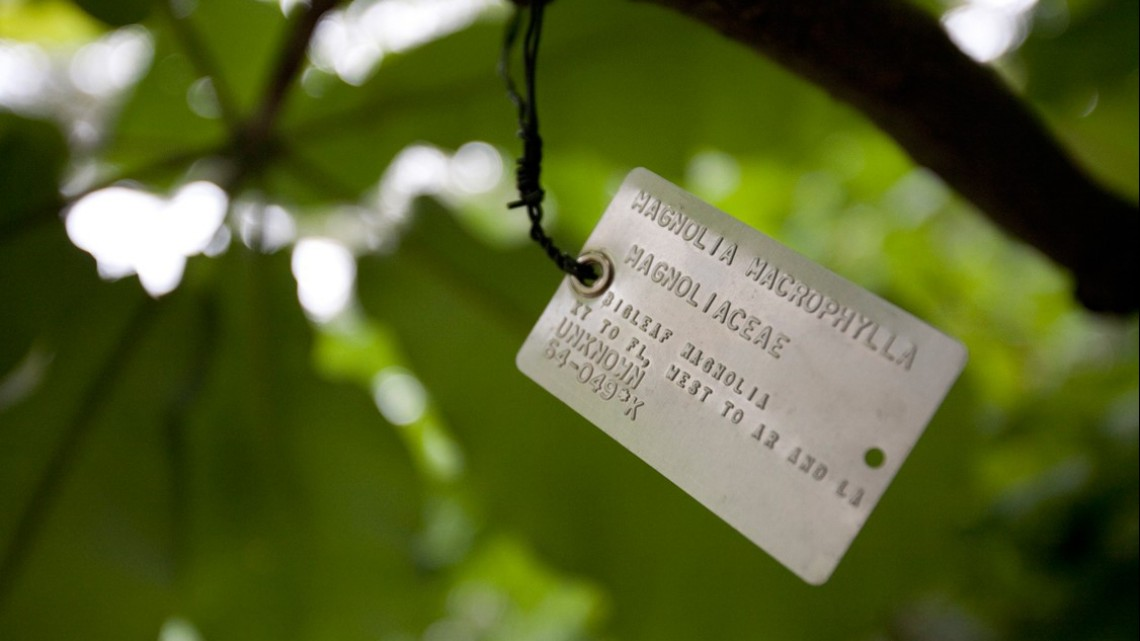 Magnolia tree tag