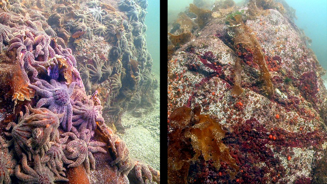 sea stars before and after