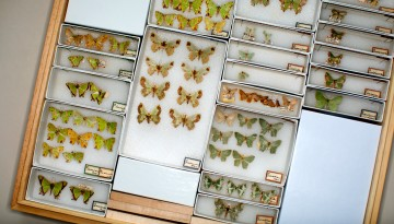 Moths collection
