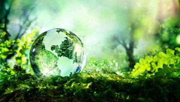 clear globe in forest
