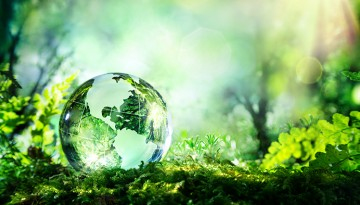 glass globe in forest