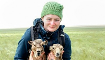 Dr. Wendy Beauvais with two saiga antelope