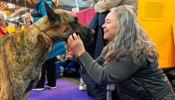 Westminster dog show backstage
