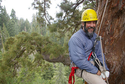 Cornellians Are First To Climb Giant Sequoia To Collect Seeds Cornell Chronicle Join to listen to great radio shows, dj mix sets and podcasts. climb giant sequoia to collect seeds