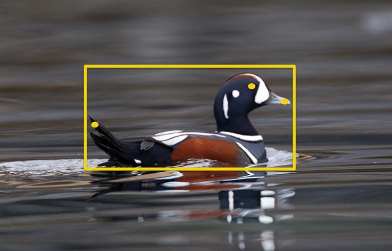 Tweet! Upload your bird photos, and Merlin IDs species