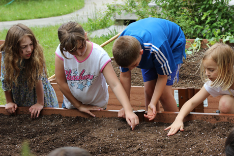 School Gardens Grow Kids Physical Activity Levels Cornell Chronicle