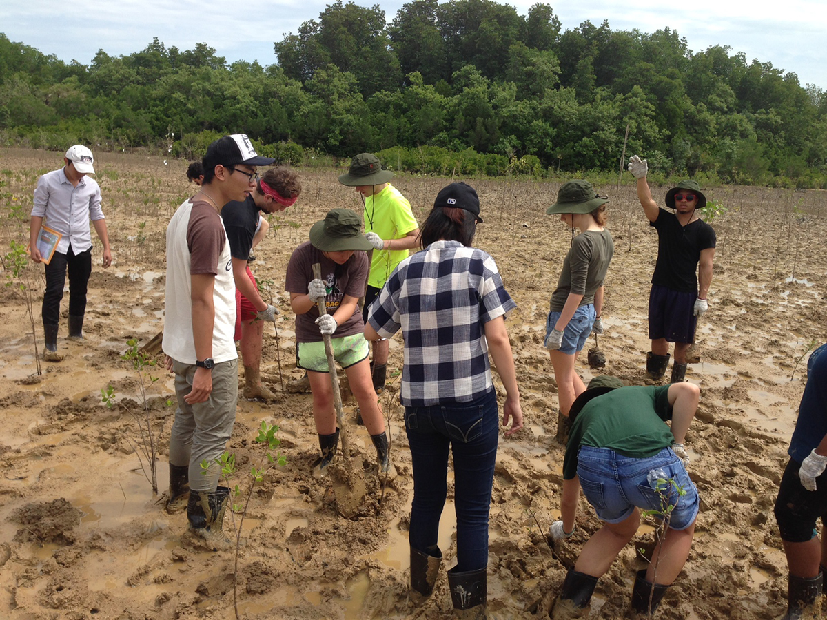 Thúy Tranviet/Provided Cornell students plant mangrove trees in Cần Giờ Biosphere Reserve in Vietnam.