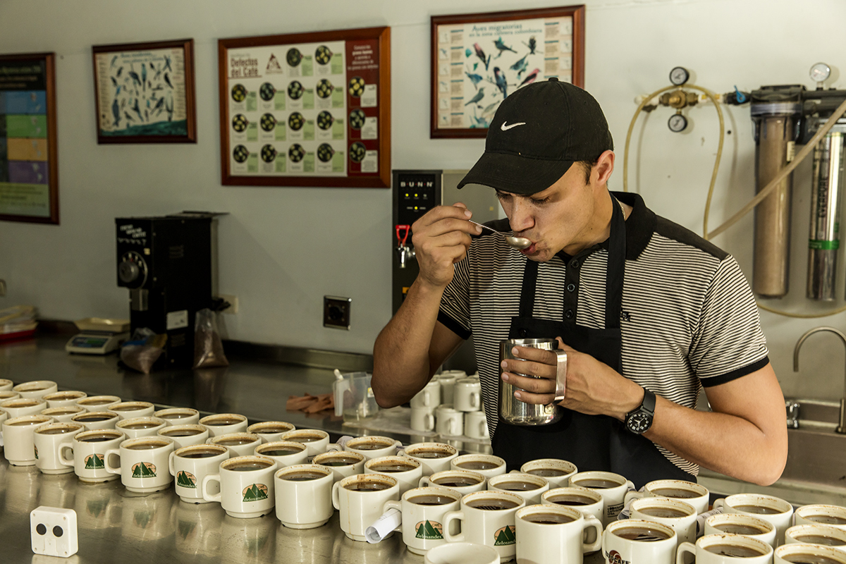 Coffee tester in Colombia