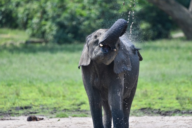 elephant washing