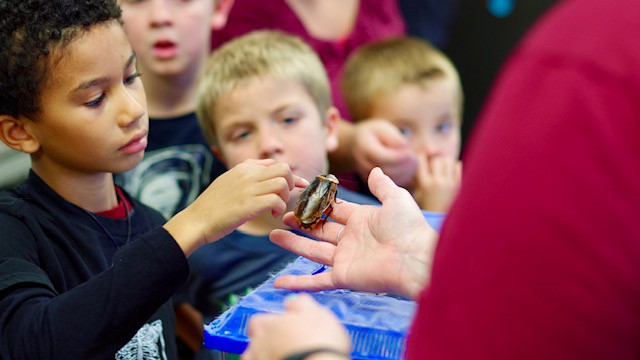 Fear Factor? Phooey! Kids swarm Insectapalooza 2018 | Cornell Chronicle