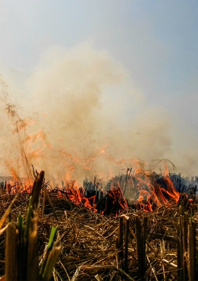 rice straw fire