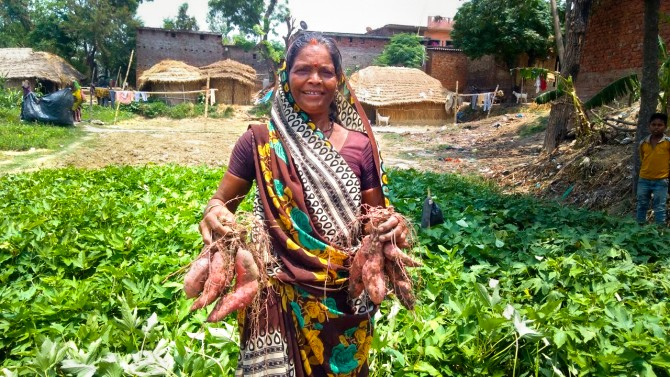farmer with sweet potatoes