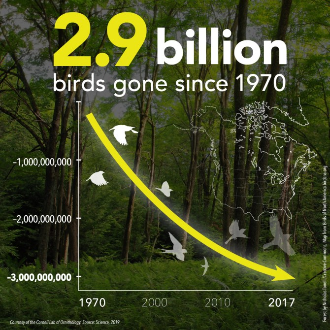Graph Showing Decline of Birds by 2.9B since 1970