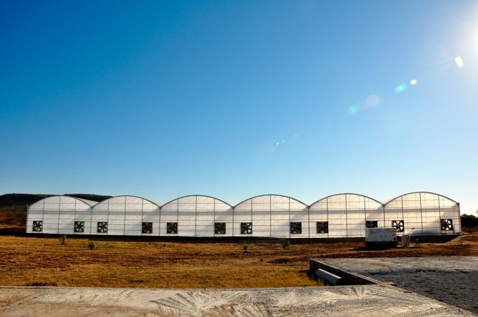 Go Fresh! greenhouses in Botswana