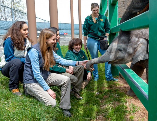 Dr. Noha Abou-Madi with elephant and students