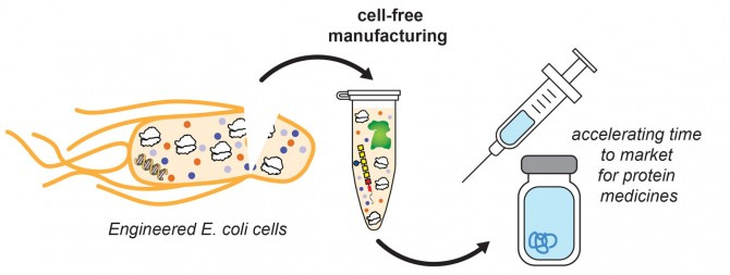 Cell-free extract diagram