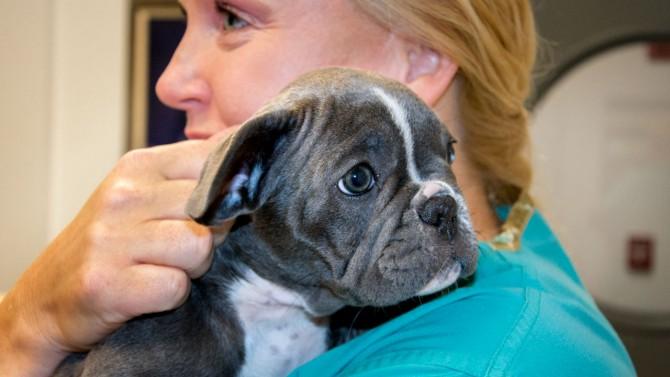 Susan Garrison with puppy